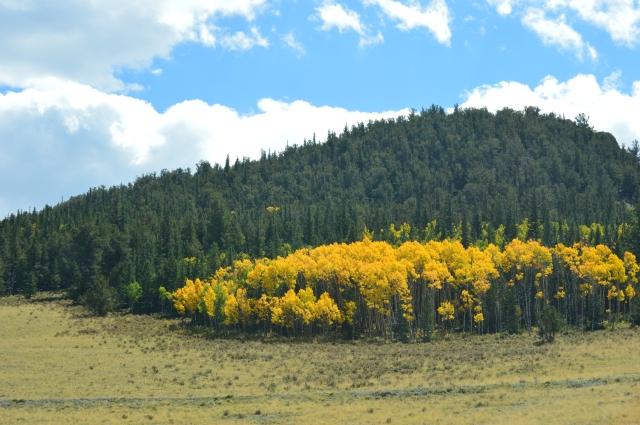 nikon pics fall colors 1 095